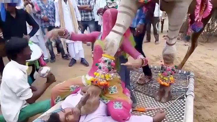 ラクダに踏まれたり噛まれたりするインドの謎の儀式映像。