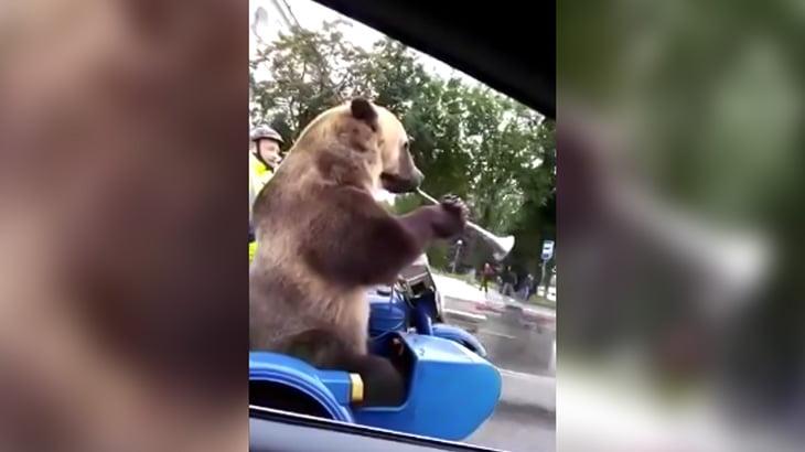 サイドカーにクマを乗せて走るバイカーの映像 in ロシア。