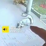 空から降ってきたネコに激突して首の骨を折ってしまった男性の映像。