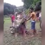 【閲覧注意】農業機械に巻き込まれて身体がよくわからない状態になってしまった男性のグロ動画。