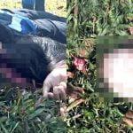 【閲覧注意】農業機械に頭蓋骨をえぐり出されて死亡した女性のグロ画像。
