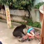 野生のクマに襲撃され負傷した住民たちの映像。