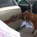 車の中の書類をヤギに食べられてしまった警察官の映像。
