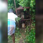 檻に入ったヒョウで遊んでいた男、一瞬で腕を裂かれてしまう映像。