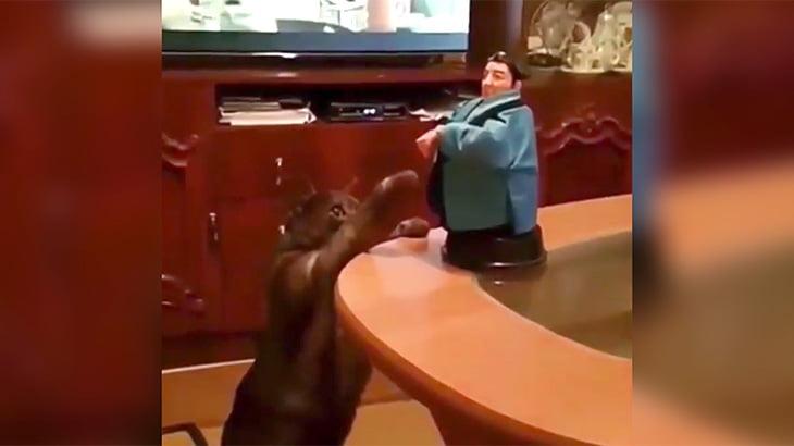 下品なおもちゃに虚無を感じるネコの映像。
