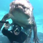 ワニと一緒に水中で自撮りする男の映像。