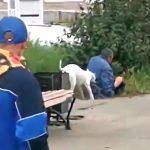 犬に噛みつかれて流血する酔っ払った男たちの映像。