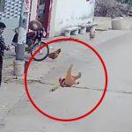 幼い男の子を突然放り投げるイカれた女の映像。