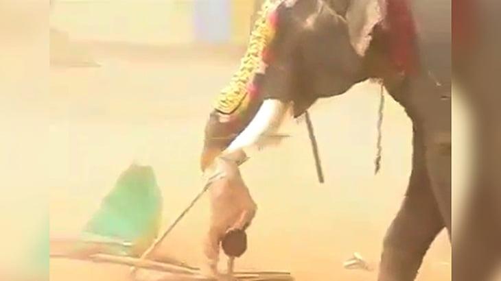 突然暴れだしたゾウにオモチャのように放り投げられて殺されてしまう男の映像。