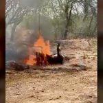 【閲覧注意】ライバルギャングの男を生きたまま燃やして殺す映像。