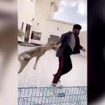 犬をケージに入れようとして腕に噛みつかれてしまった男の映像。