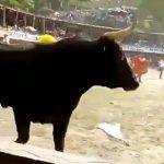 【閲覧注意】闘牛に角で刺されて内臓が飛び出してしまった男性のグロ動画。
