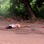 【閲覧注意】轢き逃げされた2人の女性の死体映像。