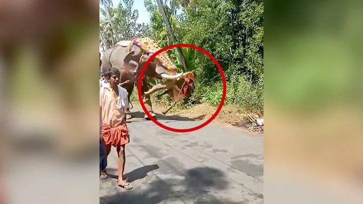 象使いの男が突然ゾウにどつかれてしまう映像。