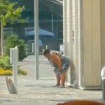 路上で中腰になりウンコして立ち去る肥満女さんの映像。