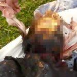 【閲覧注意】カリカリに焼けてしまった人間の死体映像。