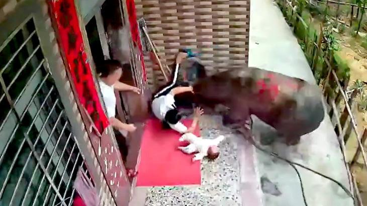 赤ちゃんを抱っこしていた女性が雄牛に突き飛ばされてしまう映像。