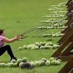 投石機でスイカを投げようとして顔面に直撃してしまう女性の映像。