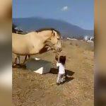 小さな女の子が馬に餌をあげてたら足蹴りされてしまう映像。