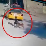 小さな女の子が8匹の野良犬に襲われてしまう映像。