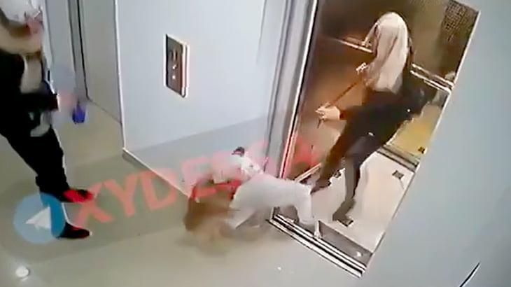 ポメラニアンがピットブルに噛み殺されてしまう映像。