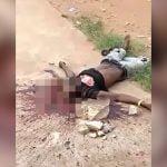 【閲覧注意】岩で顔を潰されて殺された男性のグロ動画。