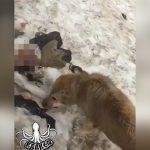 【閲覧注意】死んだ男性の身体に食らいつく犬の映像。