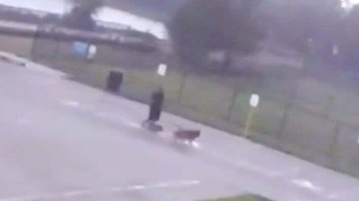 犬の散歩中にカミナリに打たれて死んでしまった男性の映像。