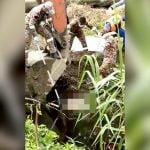 【閲覧注意】ワニに下半身を食われてしまった男性死体を川から引き上げるグロ動画。