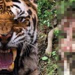 【閲覧注意】森の中でトラに食い殺された男性の死体画像。