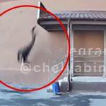 屋上から飛び降り自殺した男性が地面に激突する瞬間を捉えた映像。
