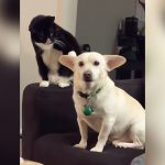パンチしようとする猫とそれに気づいてそうな犬の映像。