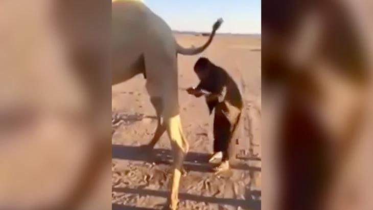 ラクダのオシッコを飲む男の映像。