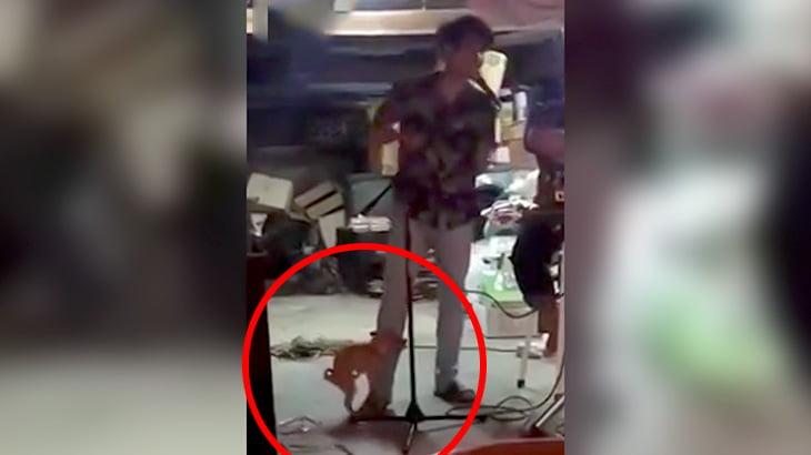 男性ボーカルの脚にしがみついてめちゃくちゃ腰を振る子犬の映像。