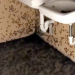 【虫注意】超大量の虫に占拠されてしまった公衆トイレの映像。