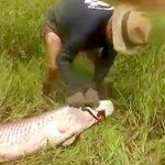 釣り上げられた大きな魚が最期に一発かます映像。