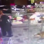 スーパーマーケットでピットブルに襲われてしまう女の子と母親の映像。