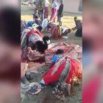 何かの動物の肉に暴れながら食らいつく女たちの映像。