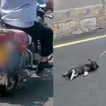 子犬をバイクで引きずるイカれた男の映像。