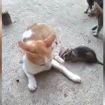 尻尾に紐でネズミをつけられてくるくる回る猫を見て笑い声をあげる映像。