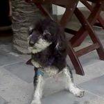 犬が前脚を使ってオチンチンをしごくオナニー映像。