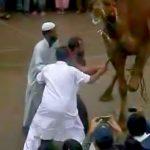 ラクダの首にナイフを突き刺して屠殺する映像。