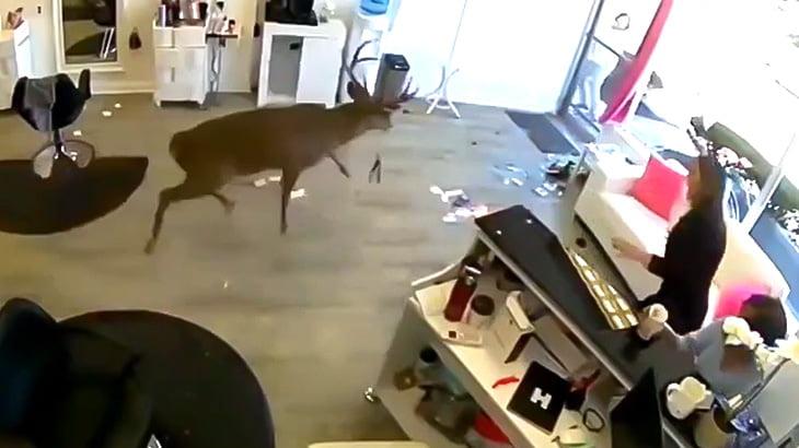 美容院の窓ガラスを突き破って鹿が乱入してくる映像。