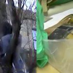 【閲覧注意】チェーンソーで木を切ってたら自分の脚を切り裂いてしまった映像