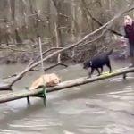 川に落ちそうになっている犬を助けるのかと思いきや助けない犬の映像。