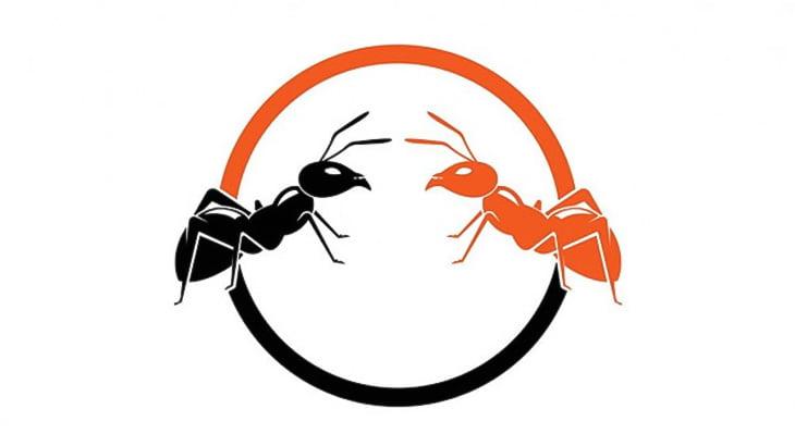 等間隔に並んで区切り線を作るアリの映像