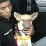 2人の子供を救うために鼻を失ってしまった犬「Kabang」の映像。