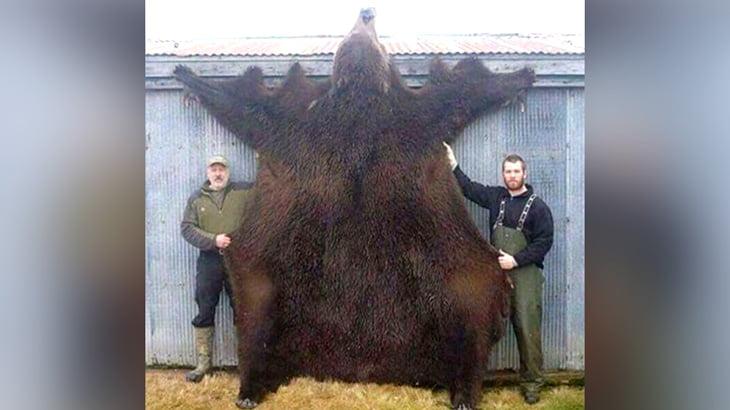 巨大なクマに食い殺された男の死体画像。