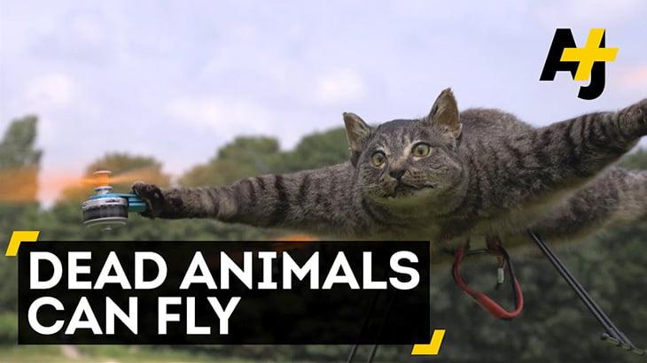 死んだ猫やダチョウ、サメなどの動物をドローンに改造してしまった映像。