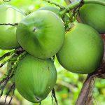 【微閲覧注意】ココナッツを産み落とす男の映像。